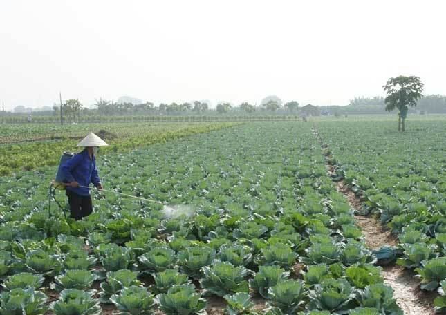 """Nông dân dùng phần mềm """"soi"""" thuốc bảo vệ thực vật"""
