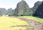 Festival features Tam Coc in golden rice fields