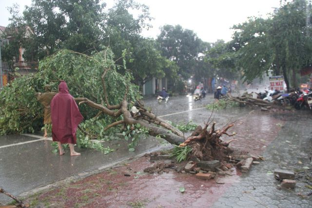 Torrential rain damages many houses, uproot trees in central Vietnam