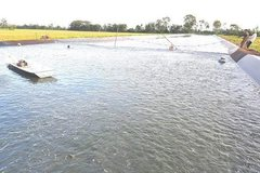 VN Tra fish breeders face heavy losses from low prices
