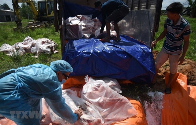 VN Government calls for drastic measure to fight ASF and ensure food safety