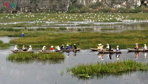 Discovering the nation's latest Ramsar site Van Long Lagoon