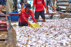 Gần 1.000 tấn cá chết trên sông La Ngà: Huyện mong tỉnh sớm có kết quả điều tra