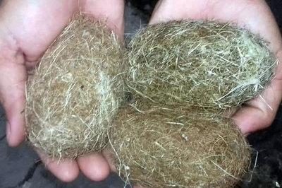 Dân phát hiện 3 'vật thể lạ' nghi 'cát lợn' ở An Giang