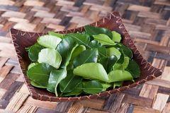 Lá chanh ở Việt Nam chỉ để ăn với thịt gà, sang châu Âu bán 6,3 triệu đồng/kg