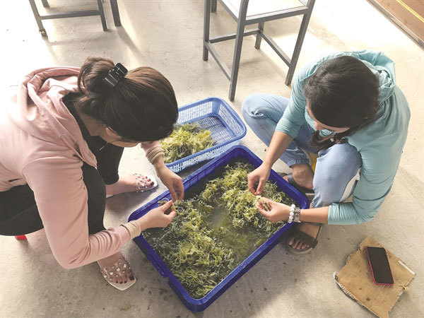 Ly Son's seaweed and seafood leaves impression on young diners