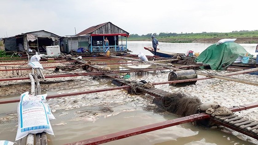 Farmers stricken with fish die-off in La Nga river