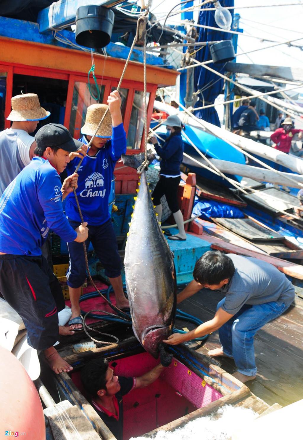 Bình Định,cá ngừ