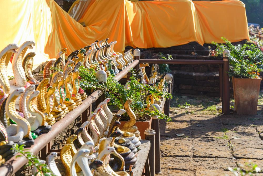 Chết khiếp vào ngôi làng nuôi hổ mang làm thú cưng