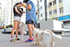 Dắt chó 'đi bậy' ở chung cư bị phạt 3,5 triệu