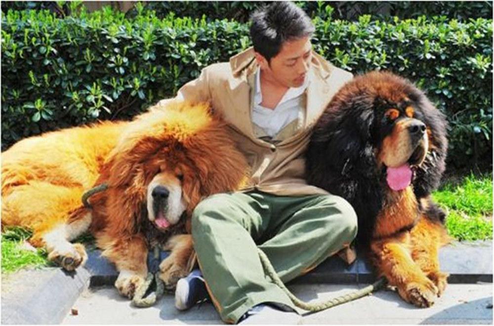Nhìn ngoài như con sư tử, đại gia rút 40 tỷ mua về bằng được
