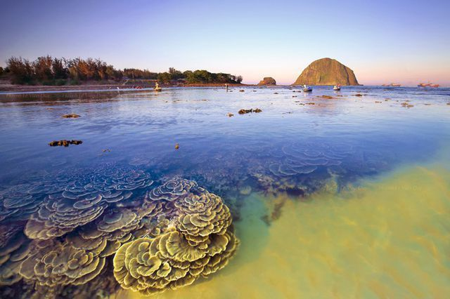 Phu Yen coral reefs in need of conservation