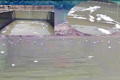 Cá chết trắng mặt hồ thủy điện Hủa Na ở Nghệ An