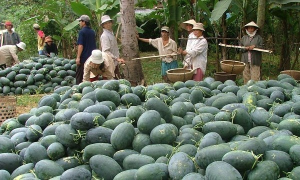Fruit exports: China changes rules, Vietnam changes strategy