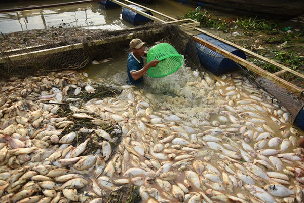 Nearly 1,000 tonnes of fish reported dead in Dong Nai River