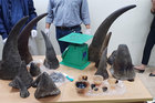 Slow progress in fight against illegal wildlife trade