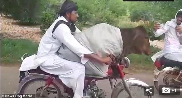 thanh niên,Pakistan,người yêu
