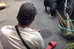 Xúc động chú chó đi bán vé số cùng người 'cha' tật hai chân