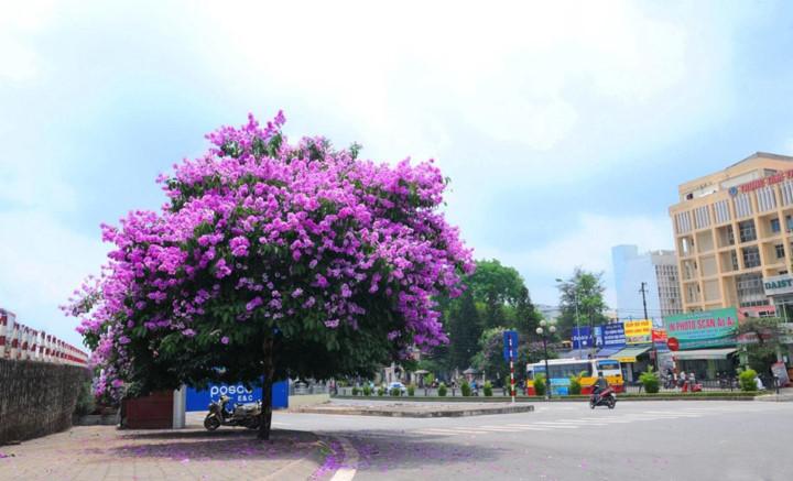Emergence of colourful flowers in Hanoi mark arrival of summer
