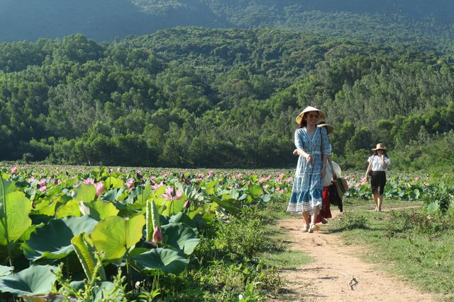 Exploring stunning lotus flower fields of Quang Nam