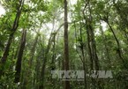 Central Highlands works toward sustainable forest development