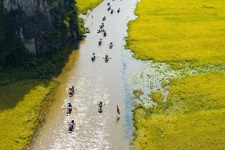 Ninh Bình's river of rice