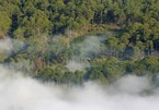 US$1.2bil. to be spent on forest protection