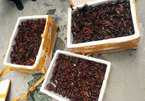 50kg of crayfish seized in Lang Son