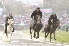 Horse festival in Lao Cai to celebrate northern highlands culture, sports