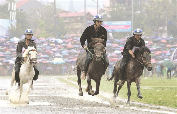 Horse festival in Lao Cai to celebrate northern highlands culture, sports