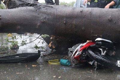 Bị cây đè chết mùa mưa bão có được bồi thường?