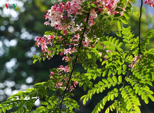 Hue city enjoys summer flowers in full bloom