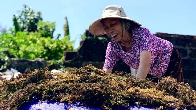 Mollusc harvest season begins in central Vietnam