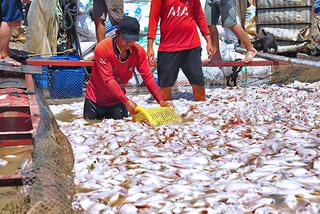 Cá chết trắng sông La Ngà: Phó Thủ tướng yêu cầu xác định nguyên nhân