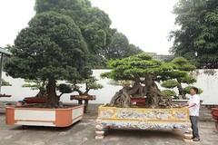 Vườn cây nghệ thuật di sản 300 tỷ độc nhất vô nhị tại Việt Nam