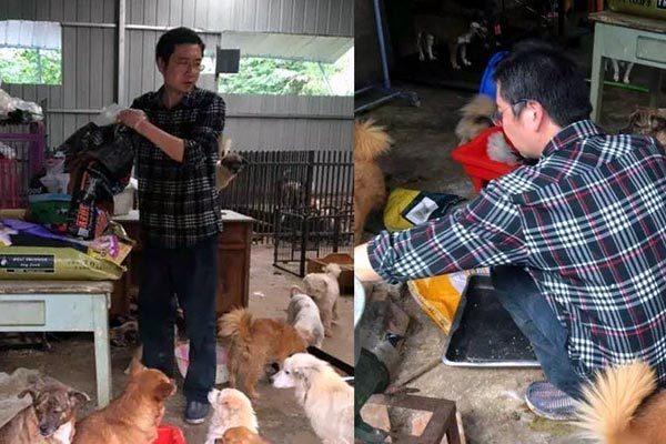 Nhận nuôi 260 chú chó hoang, người đàn ông khánh kiệt