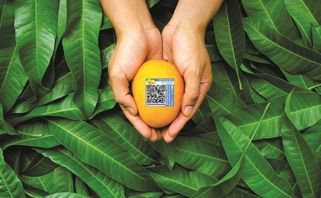 Blockchain tech helps Vietnam's mangoes reach world market