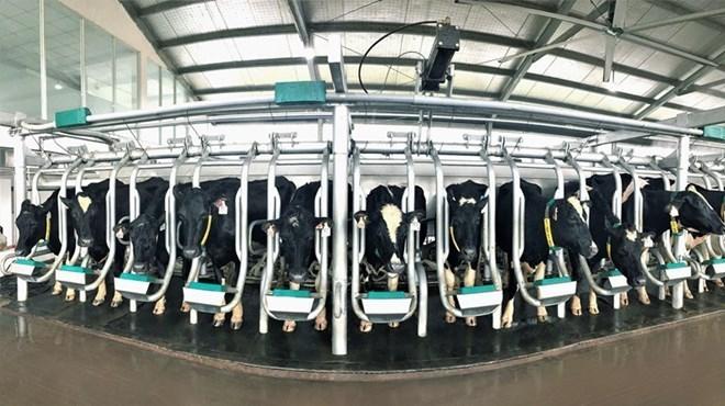 Vietnam's dairy market faces supply shortage