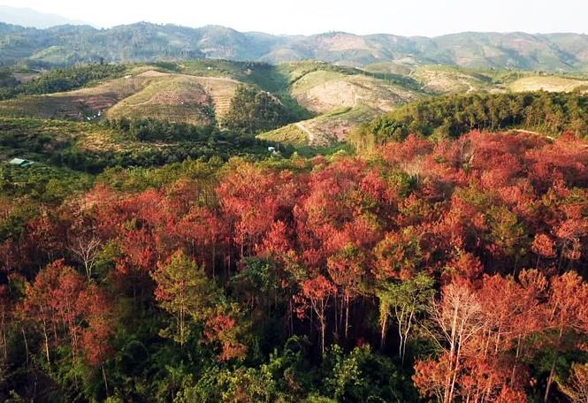 Three arrested for poisoning pine forests in Lam Dong province