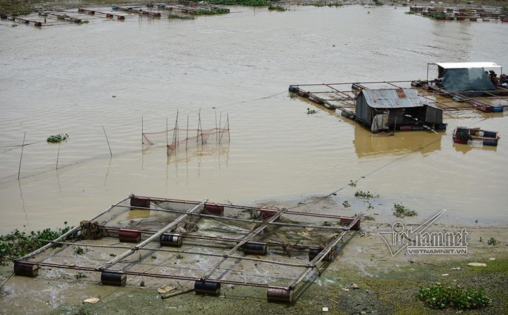 Cá chết,Đồng Nai,ô nhiễm môi trường