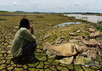 Xác cá chết khô rải dài hơn 4km bên bờ sông La Ngà
