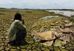 Xác cá chết khô rải dài hơn 4km bên bờ sông La Ngà, Đồng Nai