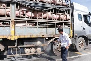 African swine fever continues to spread in Vietnam