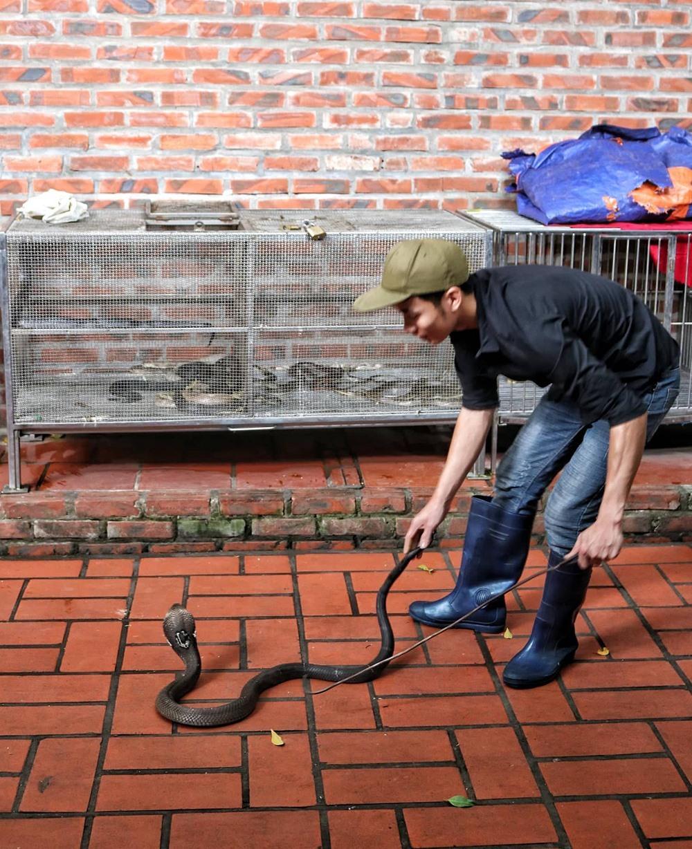 Ổ rắn hổ mang nhung nhúc trong ngôi làng ven đô Hà Nội