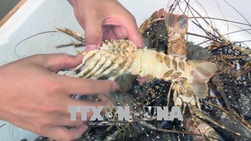 Vietnam boasts diversified marine resources