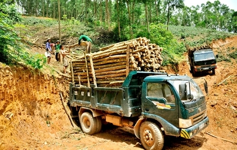 VN Agriculture Ministry gathers ideas for timber import-export regulations