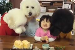 Em bé Nhật Bản tinh nghịch cho chó cưng ăn bánh