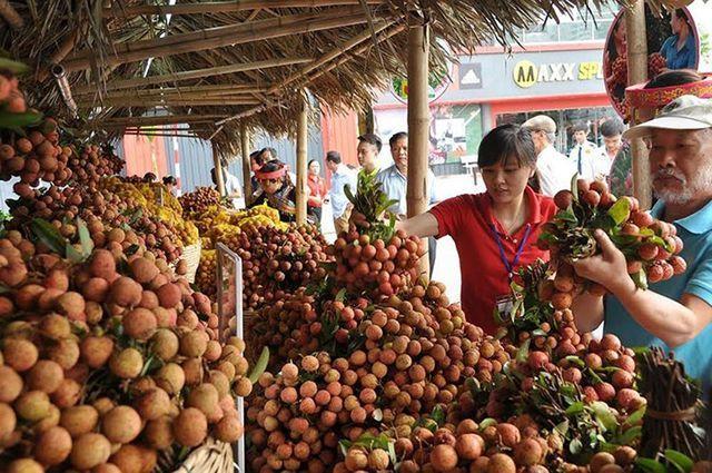 Trung Quốc thu hoạch 500.000 ha vải thiều, Việt Nam có lo?