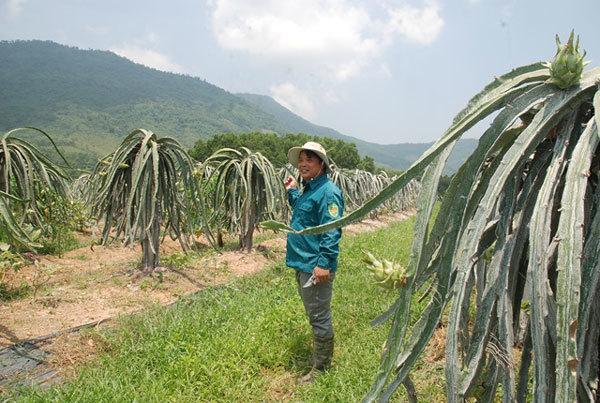 Fruit farmers strike it rich in northern Vietnam