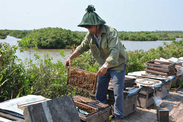 Nectar of the sea: Beekeepers making riches from the coastal mangrove
